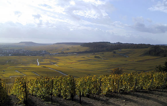 The Cote de Blancs, (c) Champagne Larmandier-Bernier