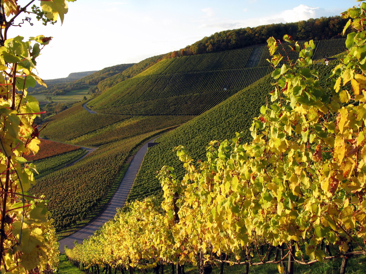 A Stromberg vineyard. Photo by (c) Rudi Thalhäuser