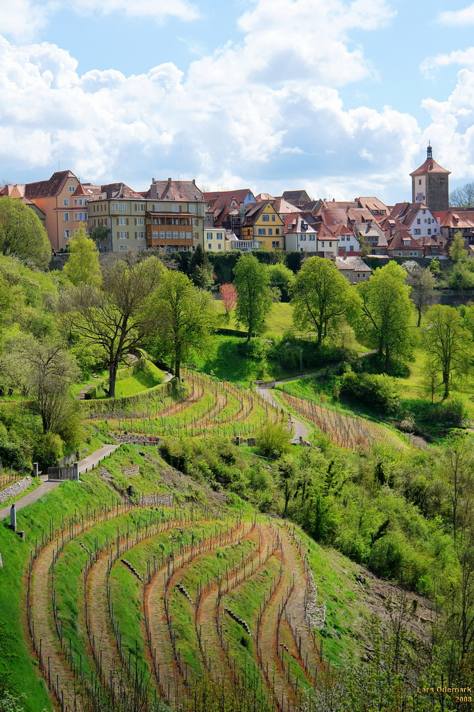 Vineyards beneath the city walls of Rothenburg.