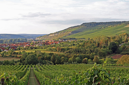 Franconian vineyards